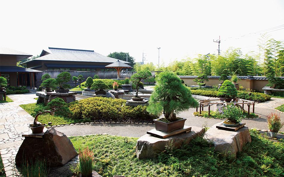 Omiya Bonsai Art Museum (Image via www.omiyabonsai.jp)