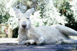 Get up close and hand-feed the kangaroo in the park