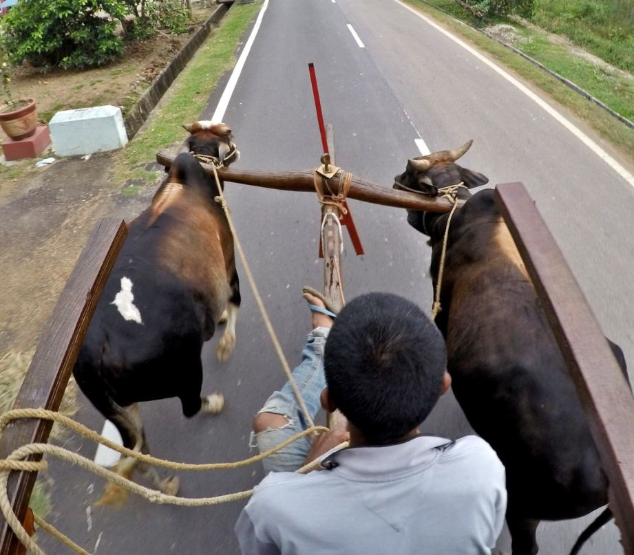 Strolling around the village on a bullock cart