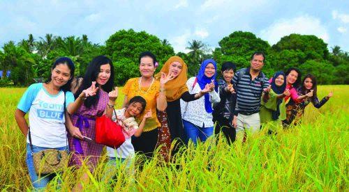 The green paddy field in Koh Klang, Krabi