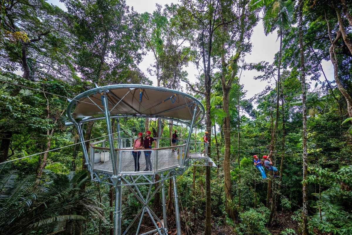 Jungle Surfing Canopy Tour