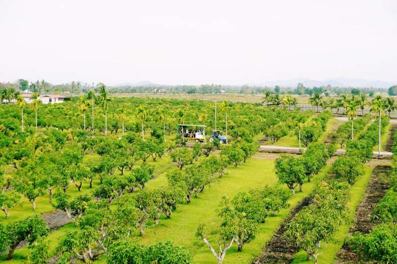 Tobiar Gold at Kampung Tobiar