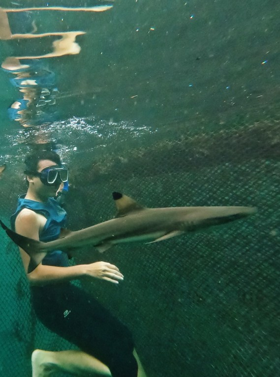 Swimming with sharks.