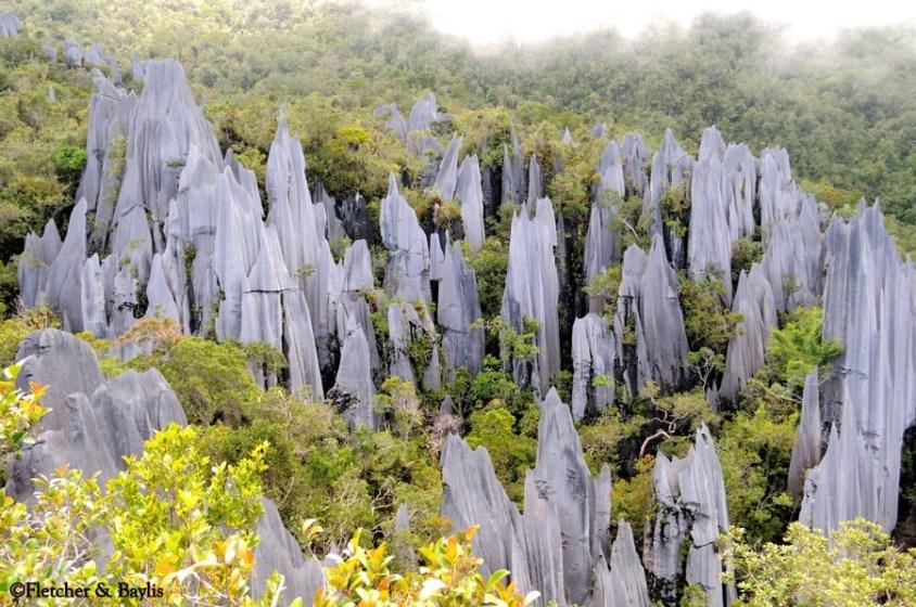 The pinnacles @ Mulu