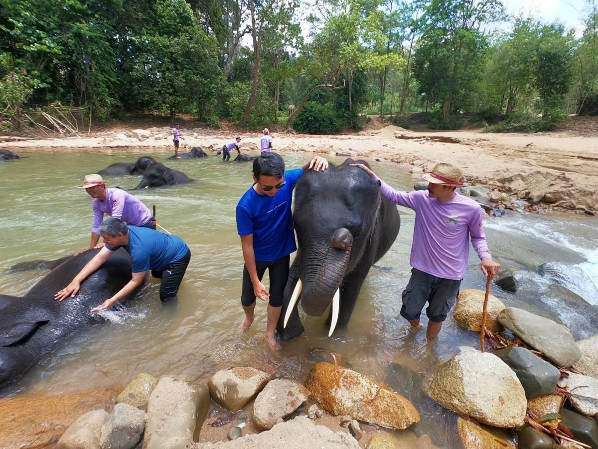 Kenyir Elephant Conservation Village (KECV)
