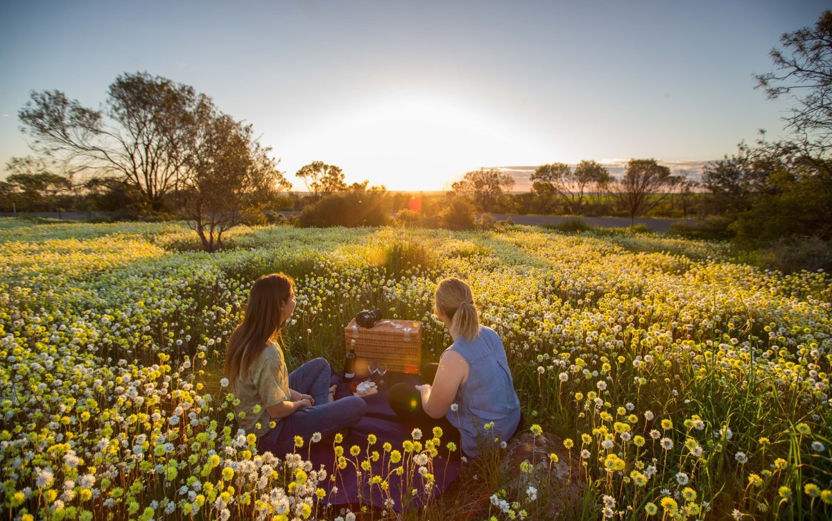 5 Best Western Australia's Wildflower Hotspots