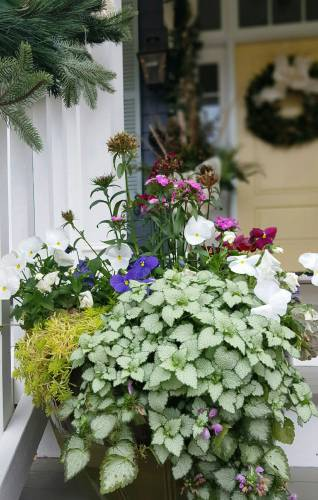 Trailing Plants Containers