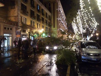 foto-albero-caduto-via-roma-1