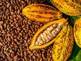Cocoa Market To Open In Nnewi, Anambra State