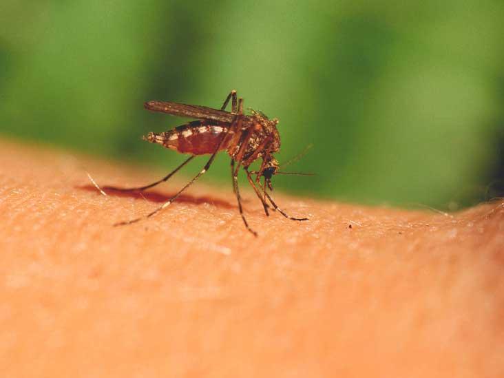 Malaria: 90% of life-saving interventions still on track -Official