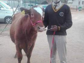 Thabelo Mudau a Best Graduating Student, has been awarded with a Cow