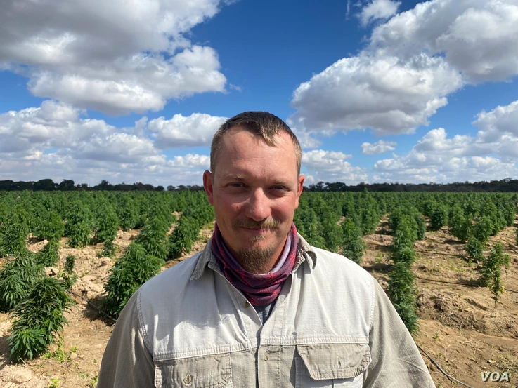 Cannabis Growing Gathers Momentum in Zimbabwe