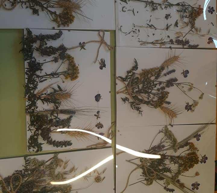 obrazy z suszonych roślin