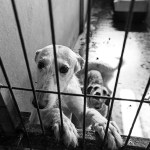 animal cruelty laws in SC