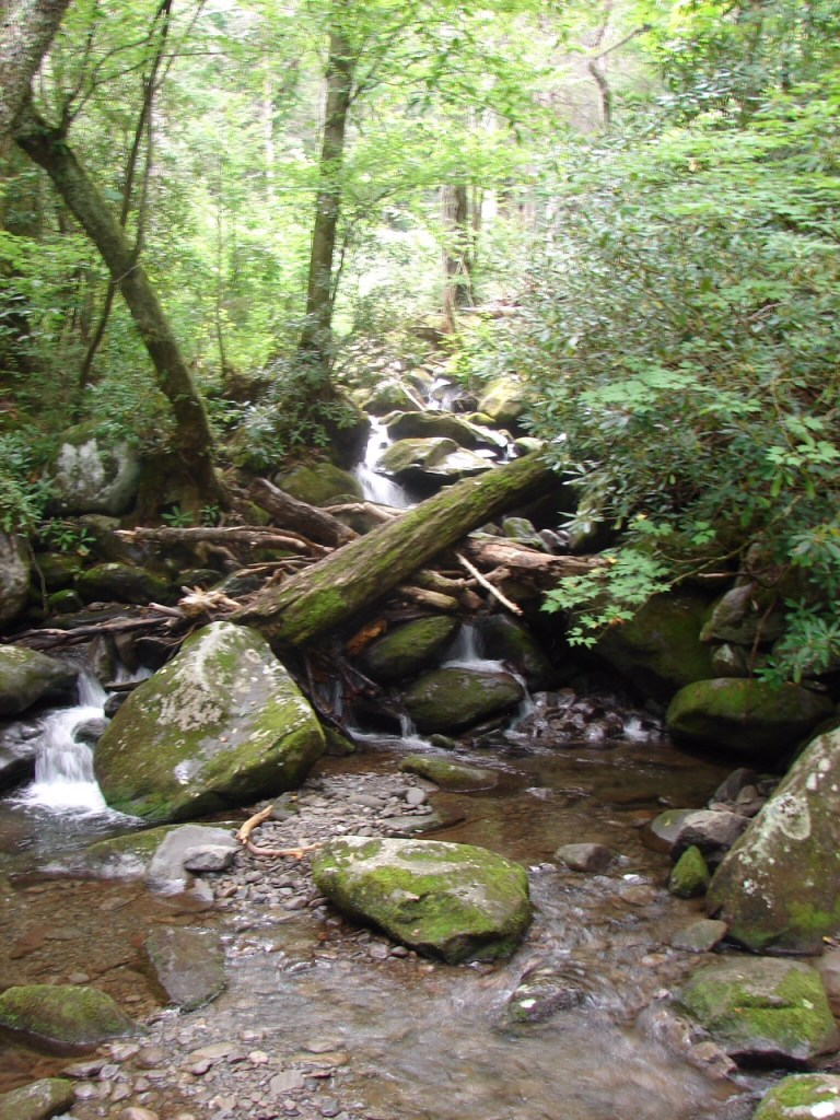 small waterfall with fallen logs and a stream