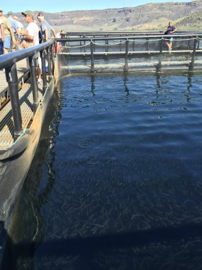 POWER gets ready to release 150,000 rainbow trout.