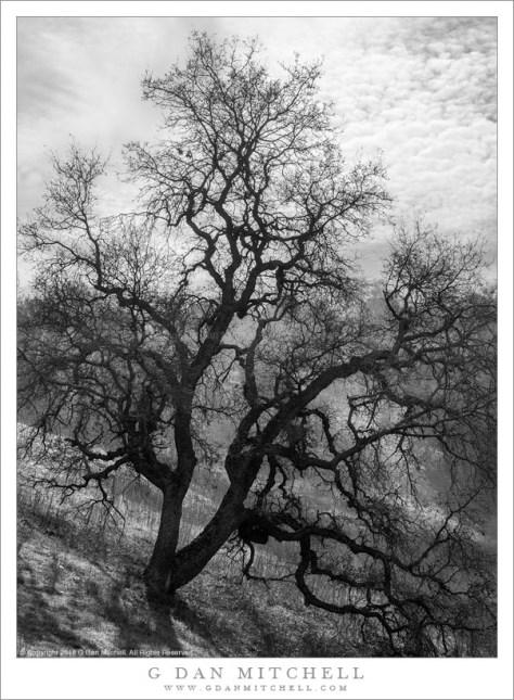 Tree, Winter Light