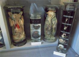 eksponaty w Gustavianum