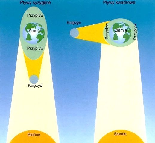 Amplituda pływów syzygijnych (większa) i kwadraturowych (mniejsza)