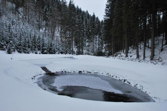 """Niewielkie """"kałuże retencyjne"""" gromadzące wody w czasie wezbrań (Nadleśnictwo Lądek-Zdrój)."""