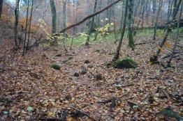 Naturalne materiały (kamienie), które z powodzeniem można wykorzystać przy budowie progów piętrzących z miejscowych materiałów – las w pobliżu Złotej Karczmy.