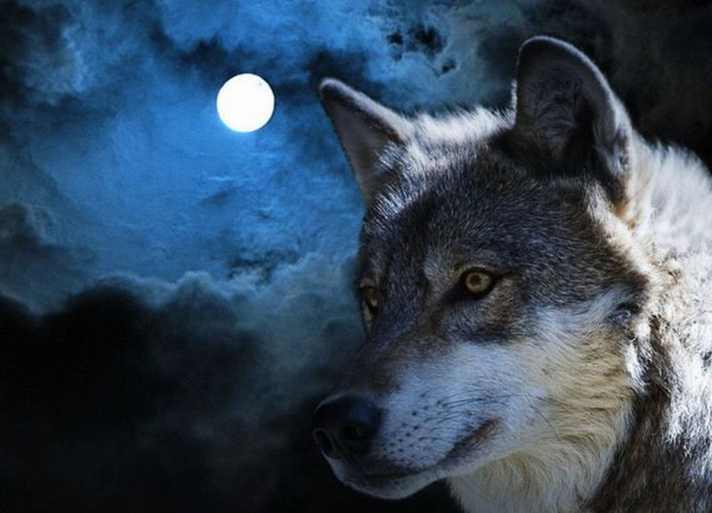 Pełnia Wilczego Księżyca, źródło: Pinterest