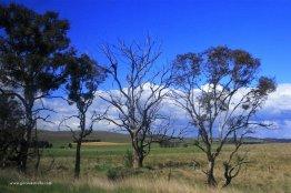 Australia, Nowa Południowa Walia