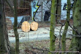 wycinka_drzew_10
