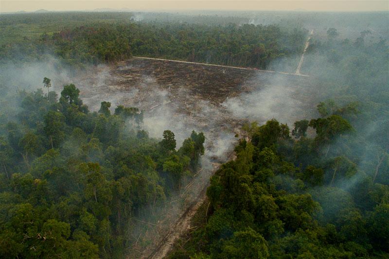 Road to Destruction by Tim Laman The Unfolding Tragedy of Wild Orangutans