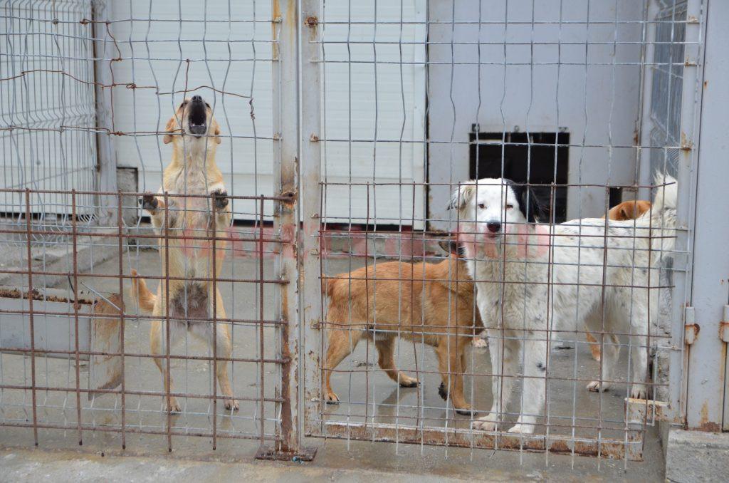Salubritatea a primit gestionarea câinilor fără stăpân, la renumărarea voturilor din Consiliul Local Craiova