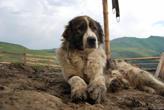 Bărbat găsit mort pe un câmp din județul Cluj. Câinii săi i-au păzit cadavrul ore întregi