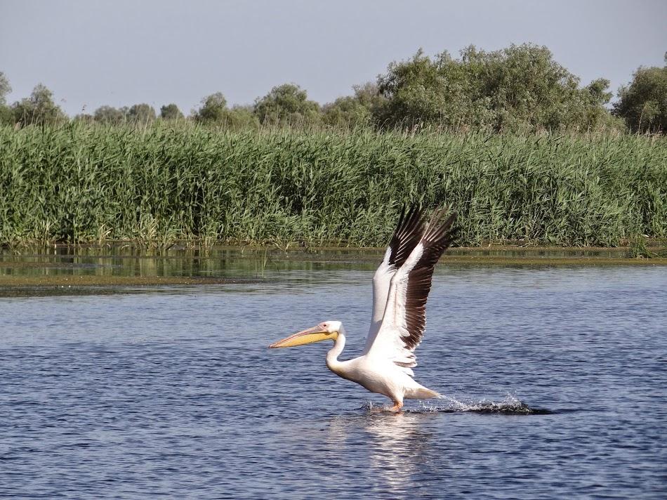 Societatea Ornitologică lansează o campanie de reducere a cantităţii de plastic din Delta Dunării