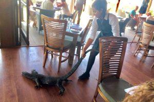 Une Serveuse Française Chasse un Reptile de son Restaurant