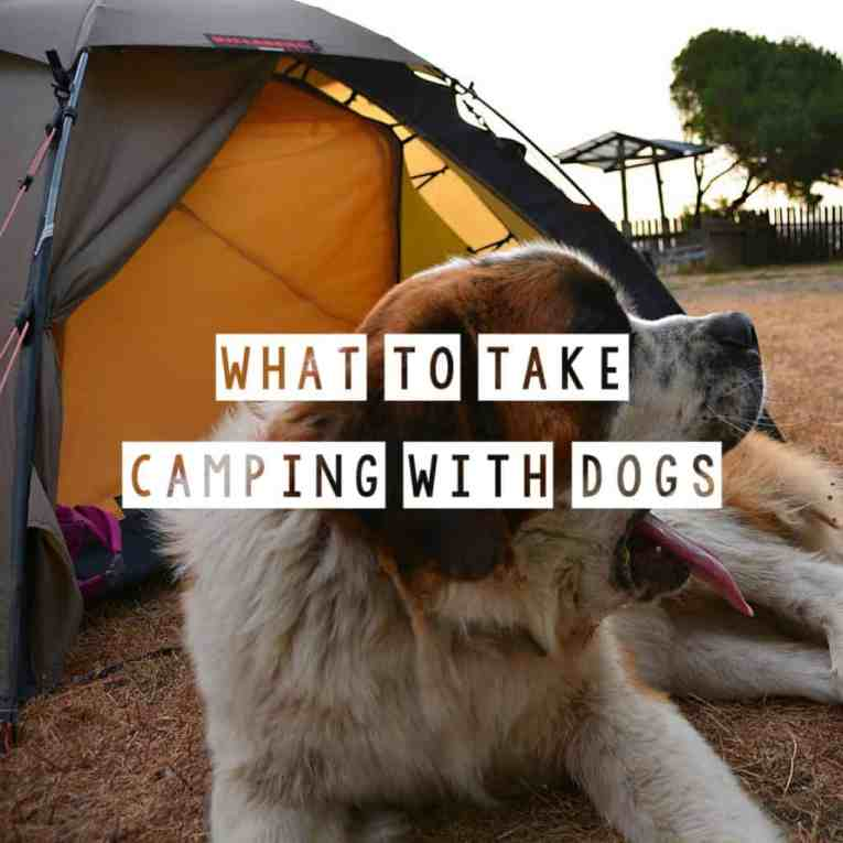 What to take camping with dogs