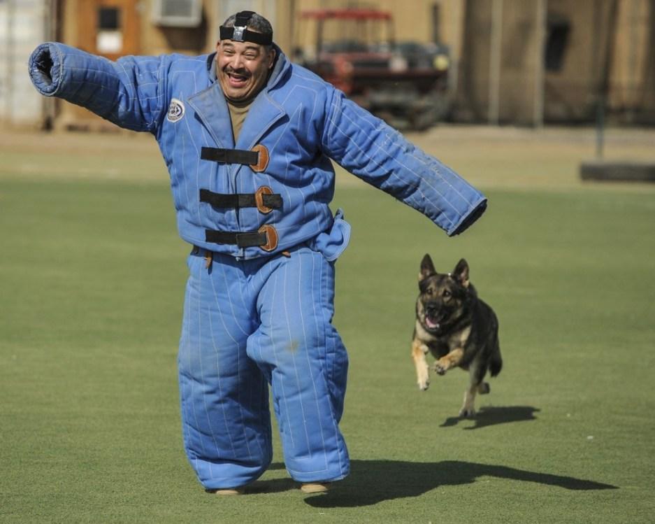 Fort Bliss: 2 Dog Bites in 1 Summer