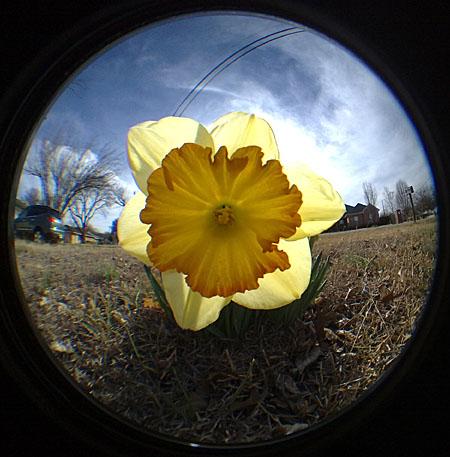 daffodilnokiafisheye