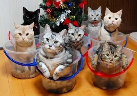 Random Cool Stuff: Too Many Cats?  Here Are a Few Ways To Organize Them!  Random Cool Stuff: Too Many Cats?  Here Are a Few Ways To Organize Them!  Random Cool Stuff: Too Many Cats?  Here Are a Few Ways To Organize Them!  Random Cool Stuff: Too Many Cats?  Here Are a Few Ways To Organize Them!