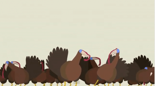 Turkey Dubstep Animation Is Awesome