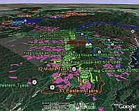 Environment Victoria Rainforest  in Google Earth