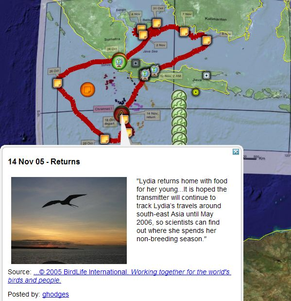 Where Is Christmas Island On A Map.Endangered Frigatebird Lydia Tracked In Google Earth