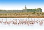 flamingos in Lefkada