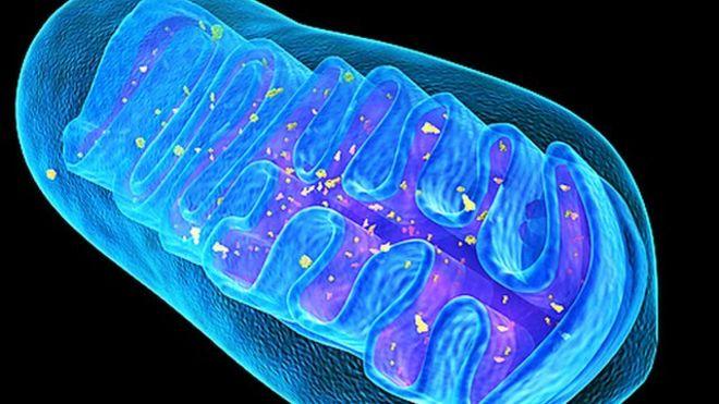 Mitokondri ve Üreme Sağlığı