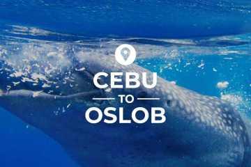 Cebu to Oslob cover image