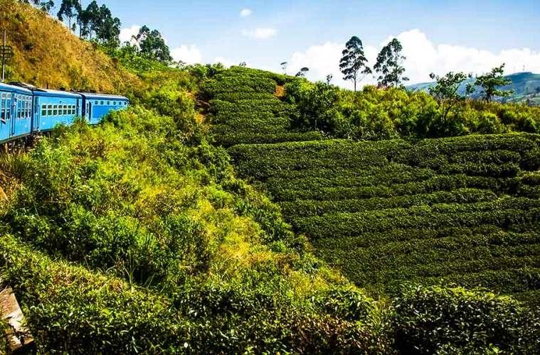 Nuwara Eliya tea plantage