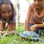 Gecko school kids with a trutle