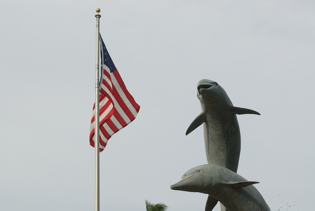 Freedom Dolphins
