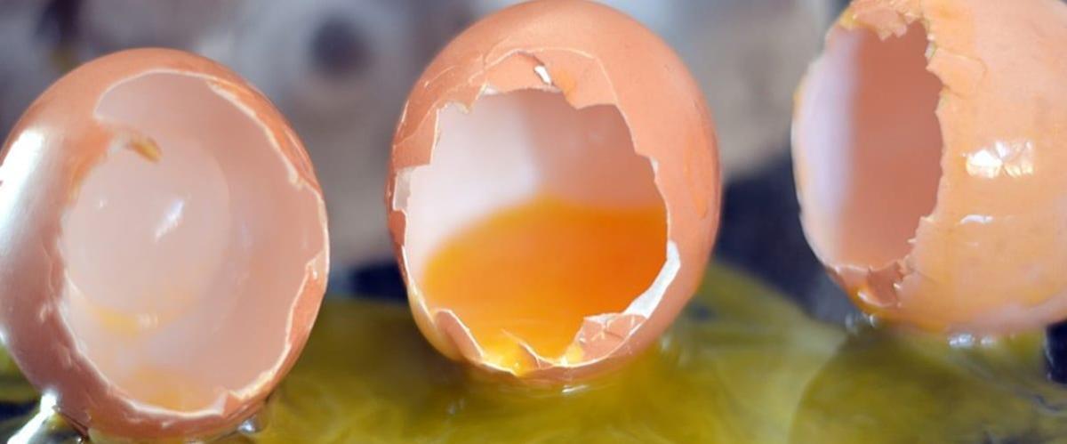 Broken_eggs_large