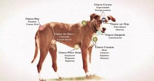 curso reiki animales perros