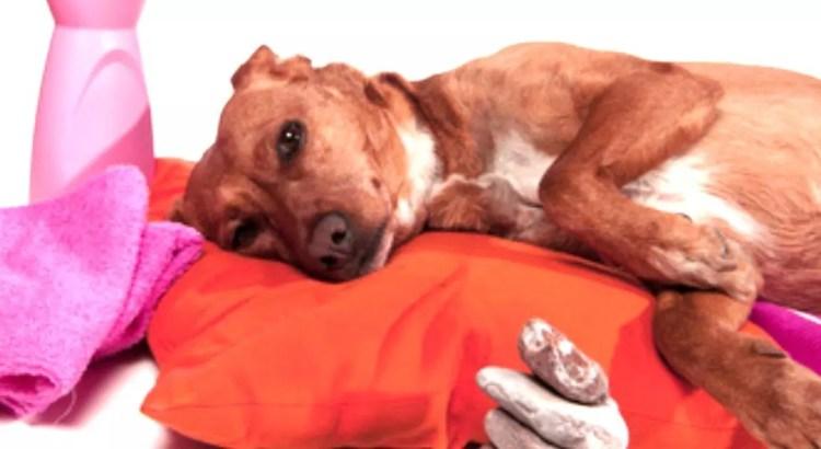 curso masaje canino