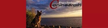 educació canina a sabadell